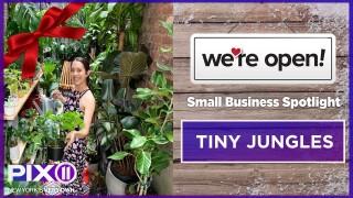 SBS: Tiny Jungles
