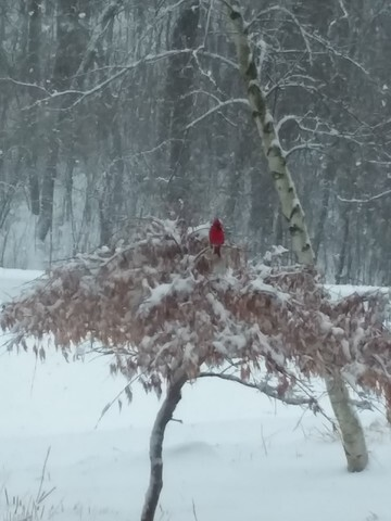 Wisconsin makes the best of Spring snowstorm [PHOTOS]