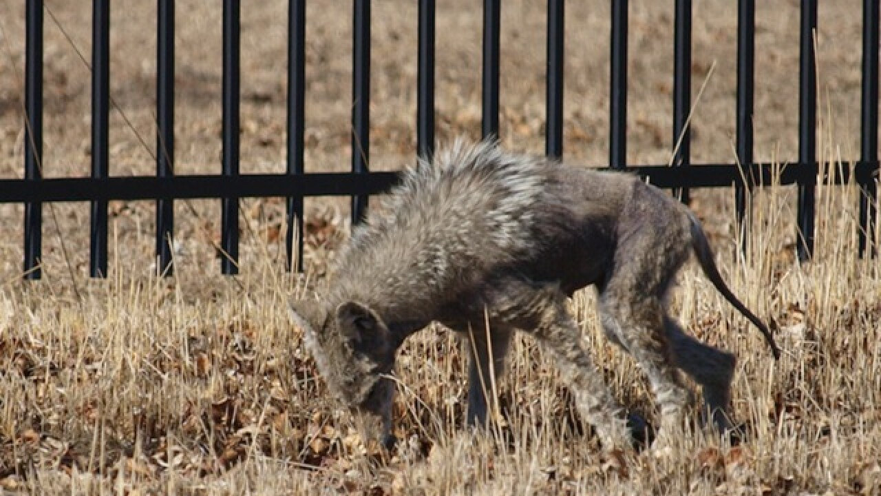 5 mythical beasts that call Arizona home