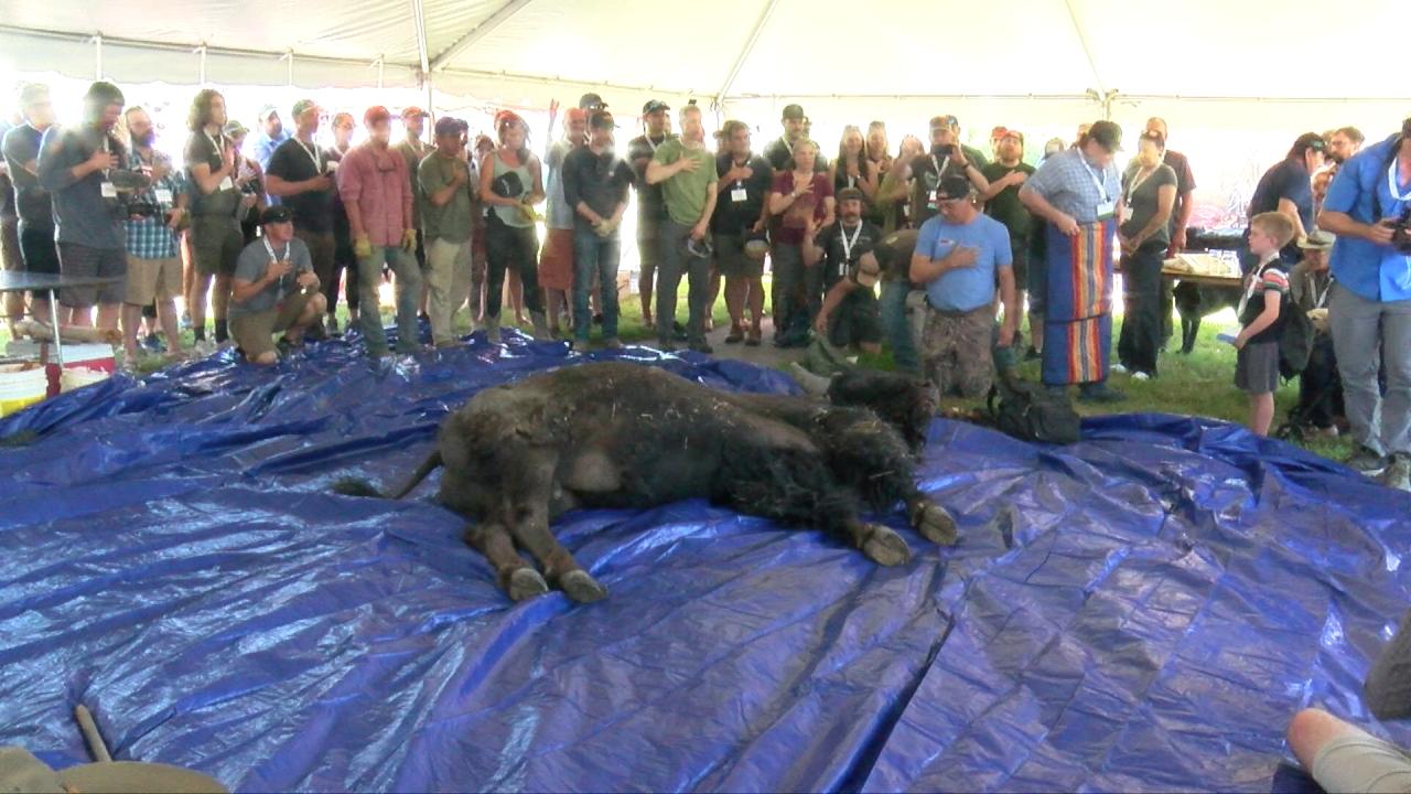 """Buffalo Breakdown"" features traditional Blackfeet bison butchering"