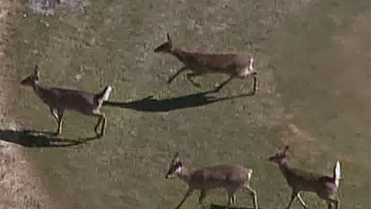 17 state parks to temporarily close for Indiana deer hunts