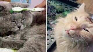People Are Petting Their Cats With Wet Toothbrushes To Mimic Grooming