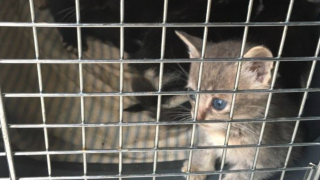 Kittens thrown in trash Portage County