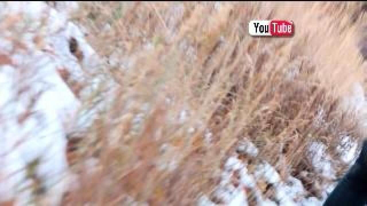 Phone interview: Bigfoot sighting in Provo Canyon?