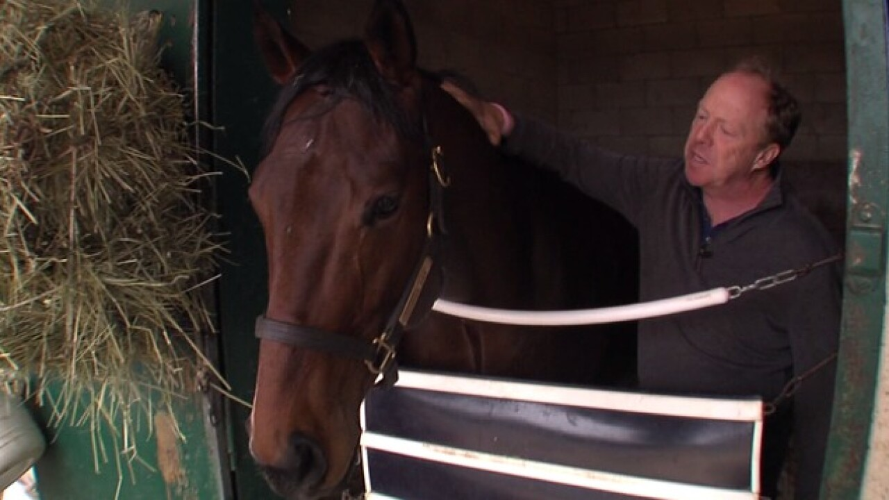 Horses displaced by Lilac Fire to return home