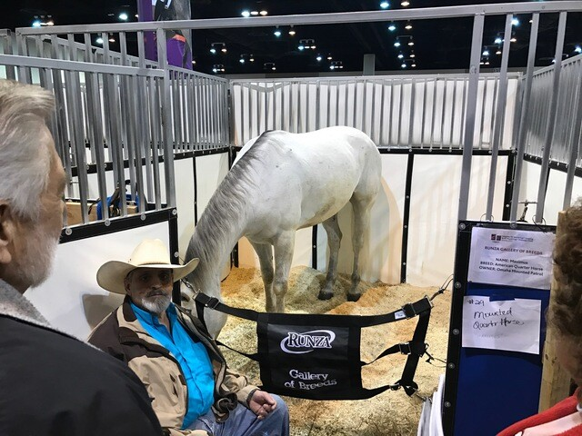 FEI World Cup: Gallery of horse breeds