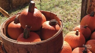 Tree Towne Pumpkin Patches now open.