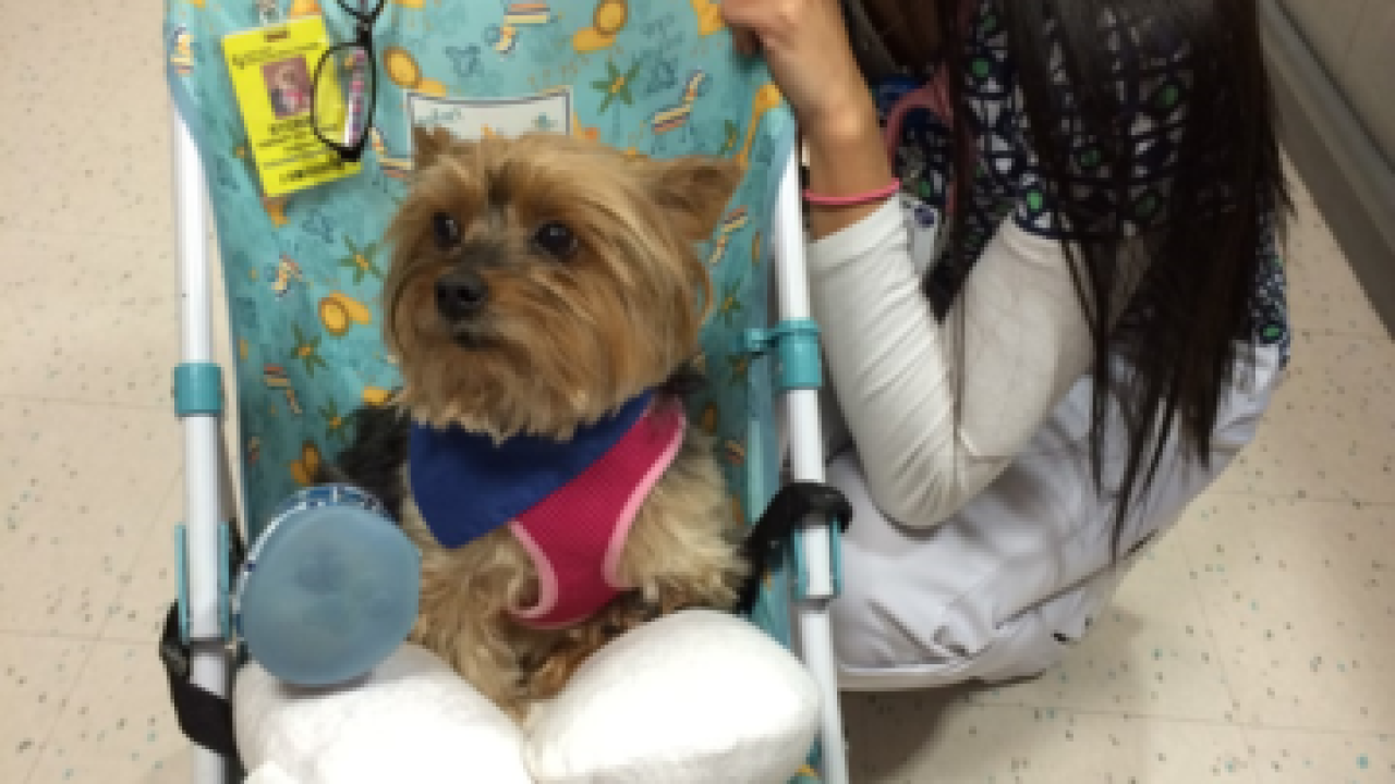 Therapy dog gets a little extra TLC from...