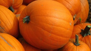 Coast Guard members throw pumpkins at each other for National Pumpkin Day