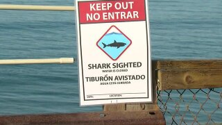 Researchers: Great white shark attacked 13-year-old boy off Beacon's Beach in Encinitas