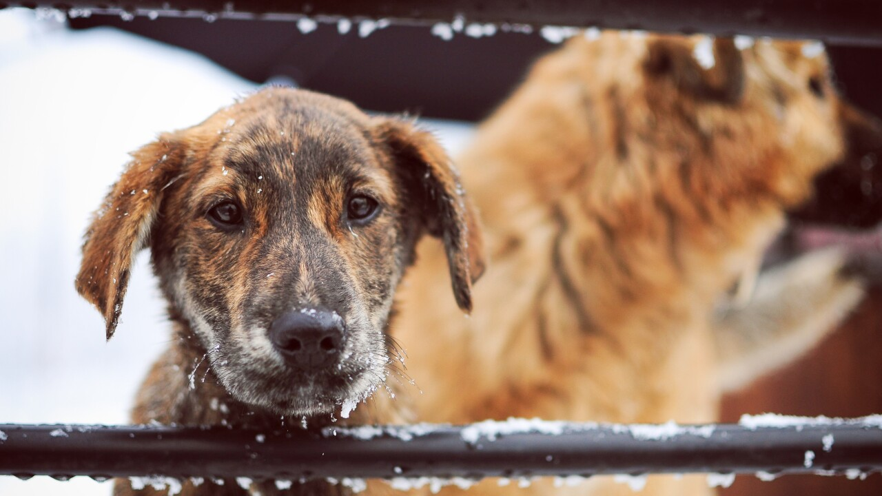 Petition aims to protect dogs in Va. from extreme weather