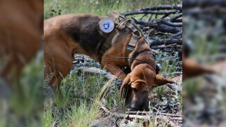 Colorado search and rescue K-9 dies from cancer