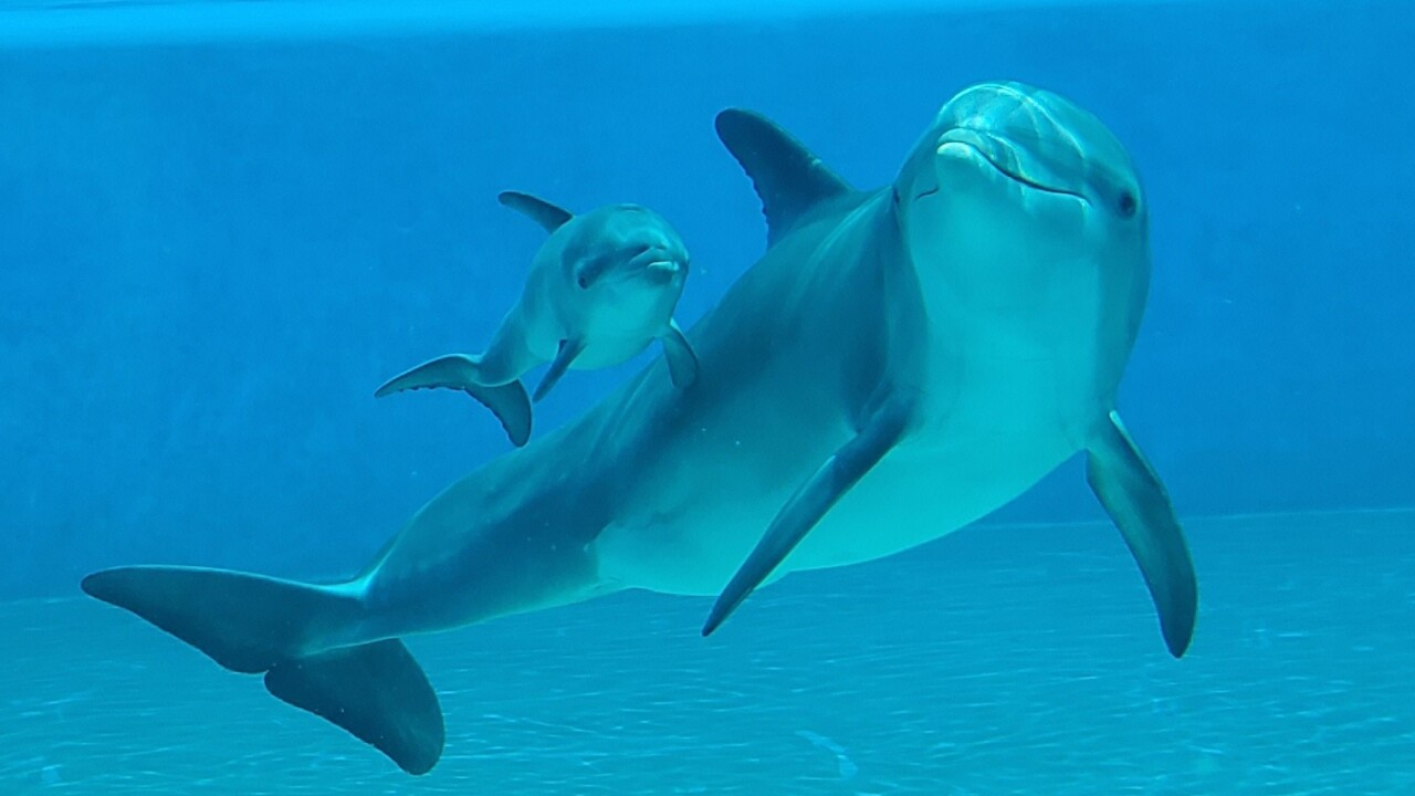 TheMirage_DolphinHabitat_BellaCalf_2_Unlimited_NoExp.jpg