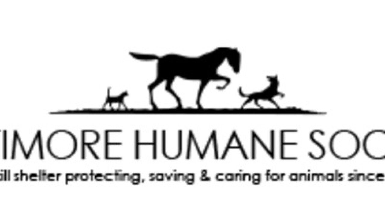 Baltimore Humane Society in need of donations