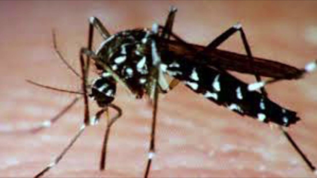 Why Zika virus testing will take place in Richmond