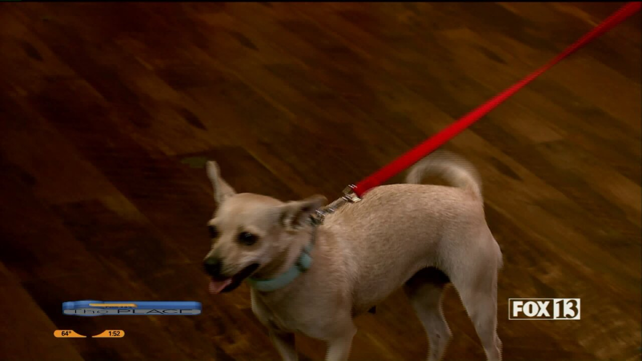 Mona the Chihuahua is kennel trained, and has puppies you can adopt, as well