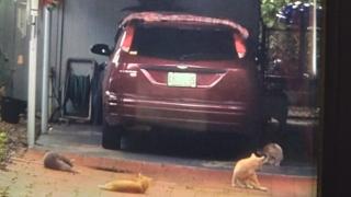 i-team-feral-cats.png