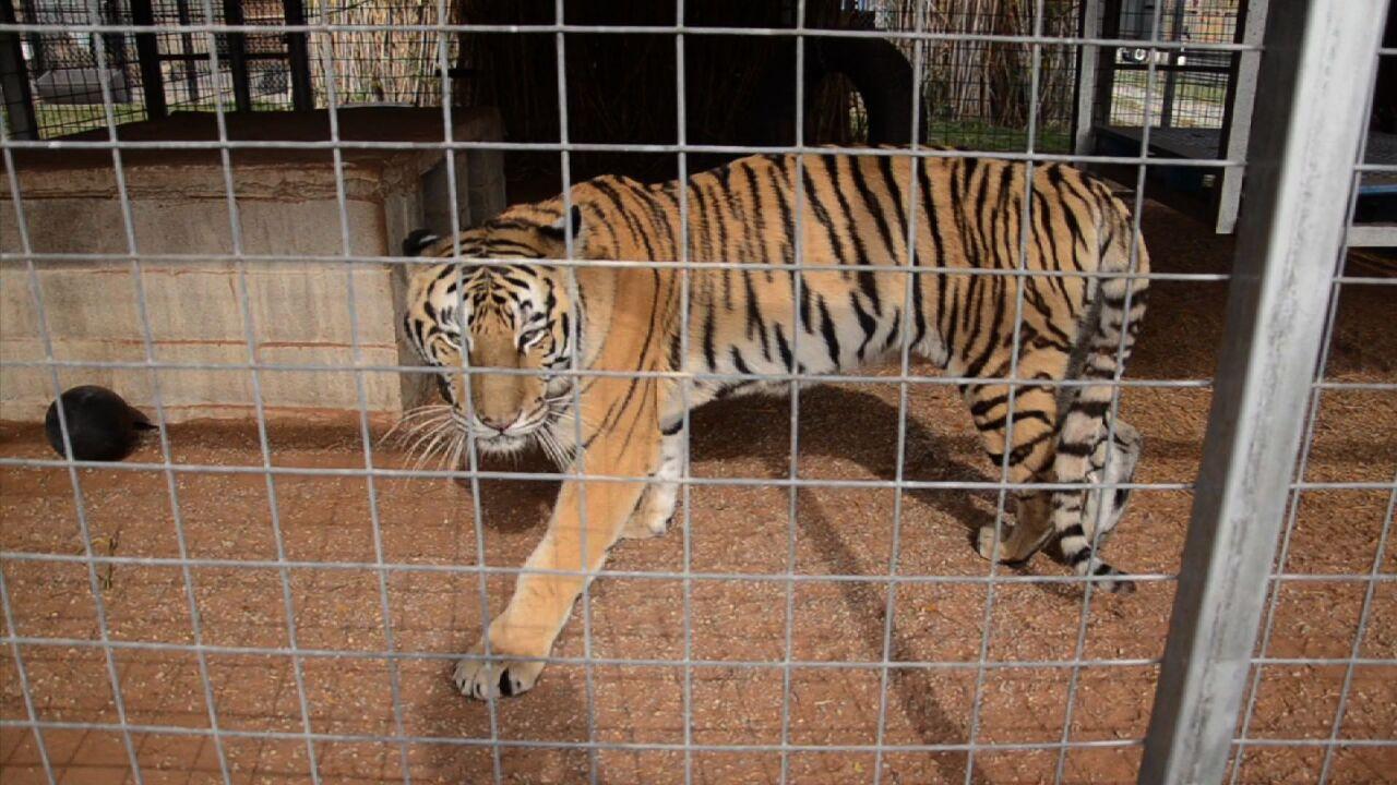 HSUS undercover photos at GW Zoo