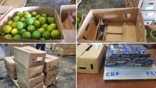 46 pounds of cocaine found hidden in shipment of oranges in Florida