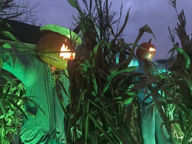 Photo gallery: Halloween on Tillson Street in Romeo