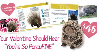 Virginia Zoo offers 'PorcuFINE' Valentine's Dayspecial