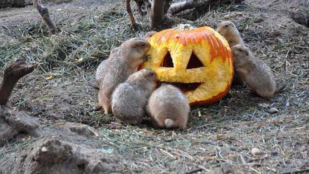 "Zoo celebrates ""Merry, not Scary"" ZooBoo"