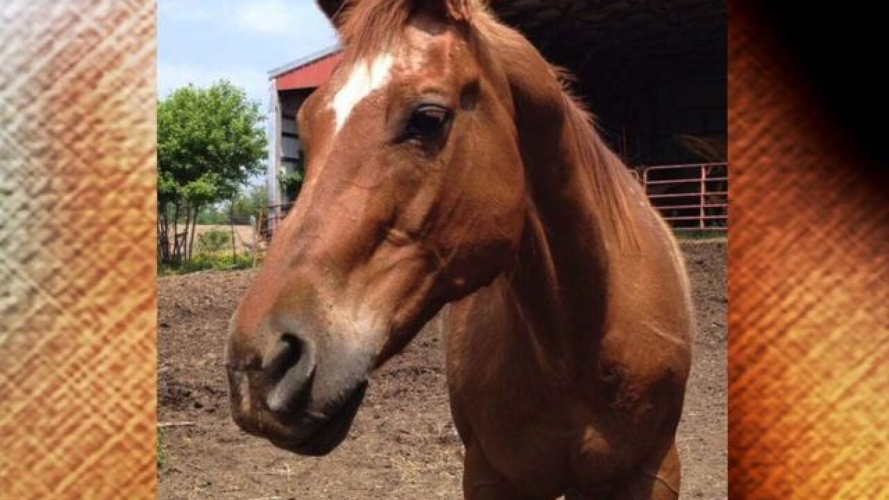 Large animal attacks, kills horse in Owen County