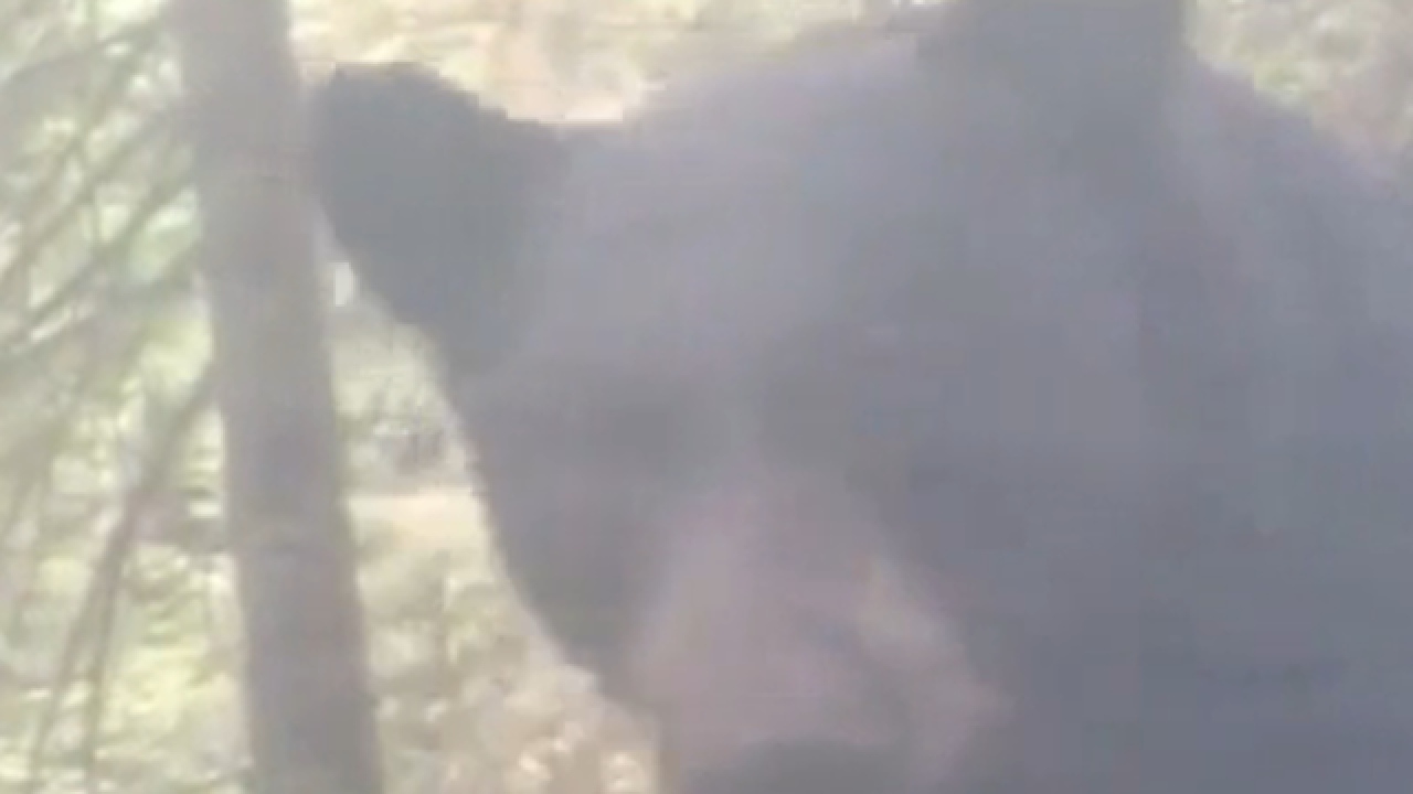 VIDEO: Camper wakes up next to bear