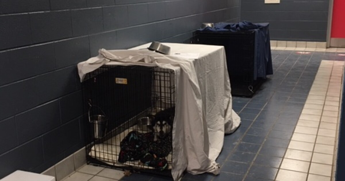 A full house at the Indianapolis animal shelter