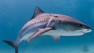 Modifying statewide shark regulations