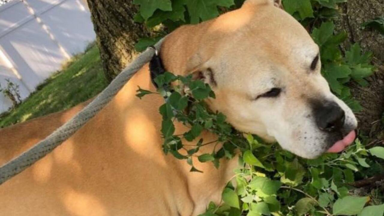 A dog in Indiana spent half her life in a shelter. Now, she has a forever family