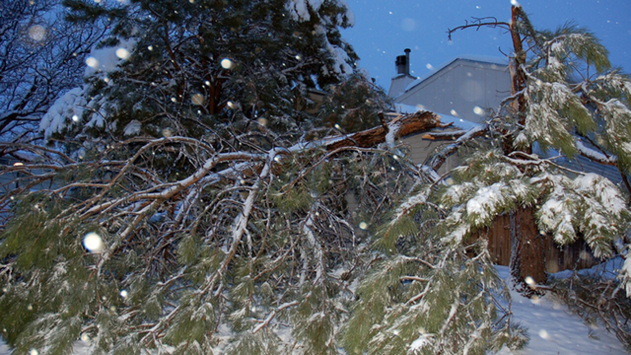 7 tips to remove, restore snow-damaged trees
