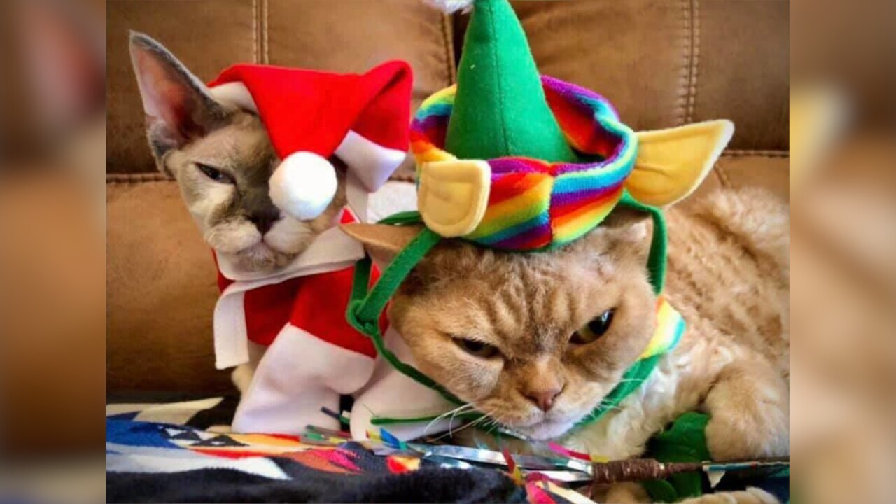 Grumpy Christmas Cats