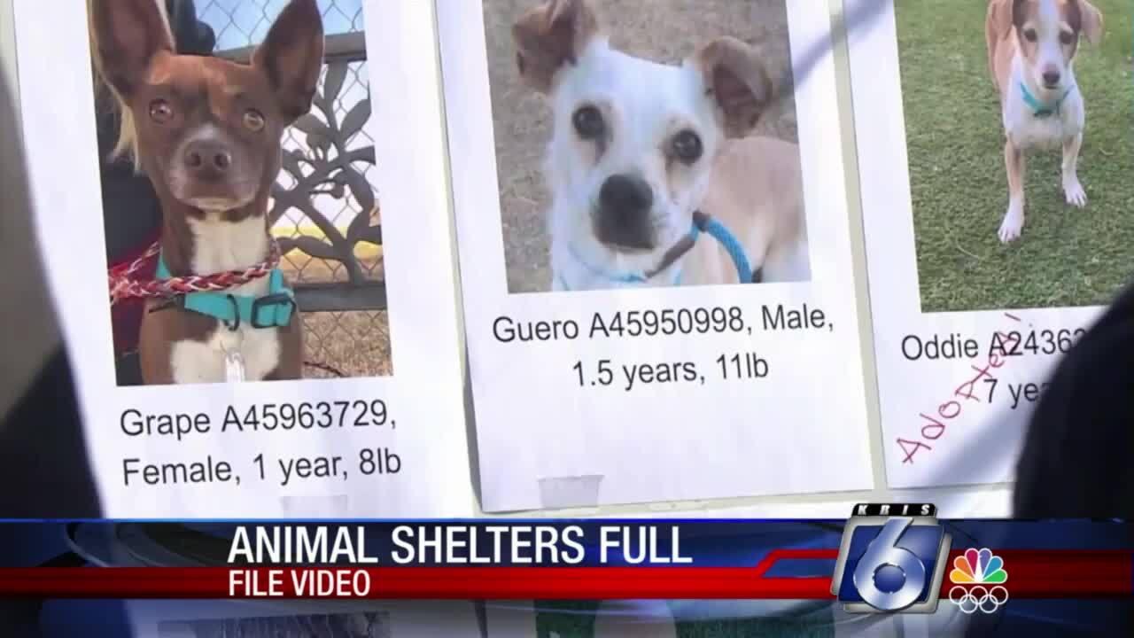 animal shelters full.jpg