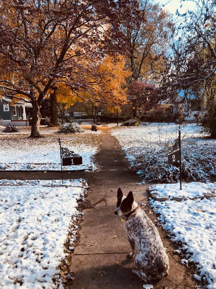 fall in snow