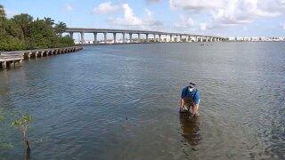 St. Lucie Estuary