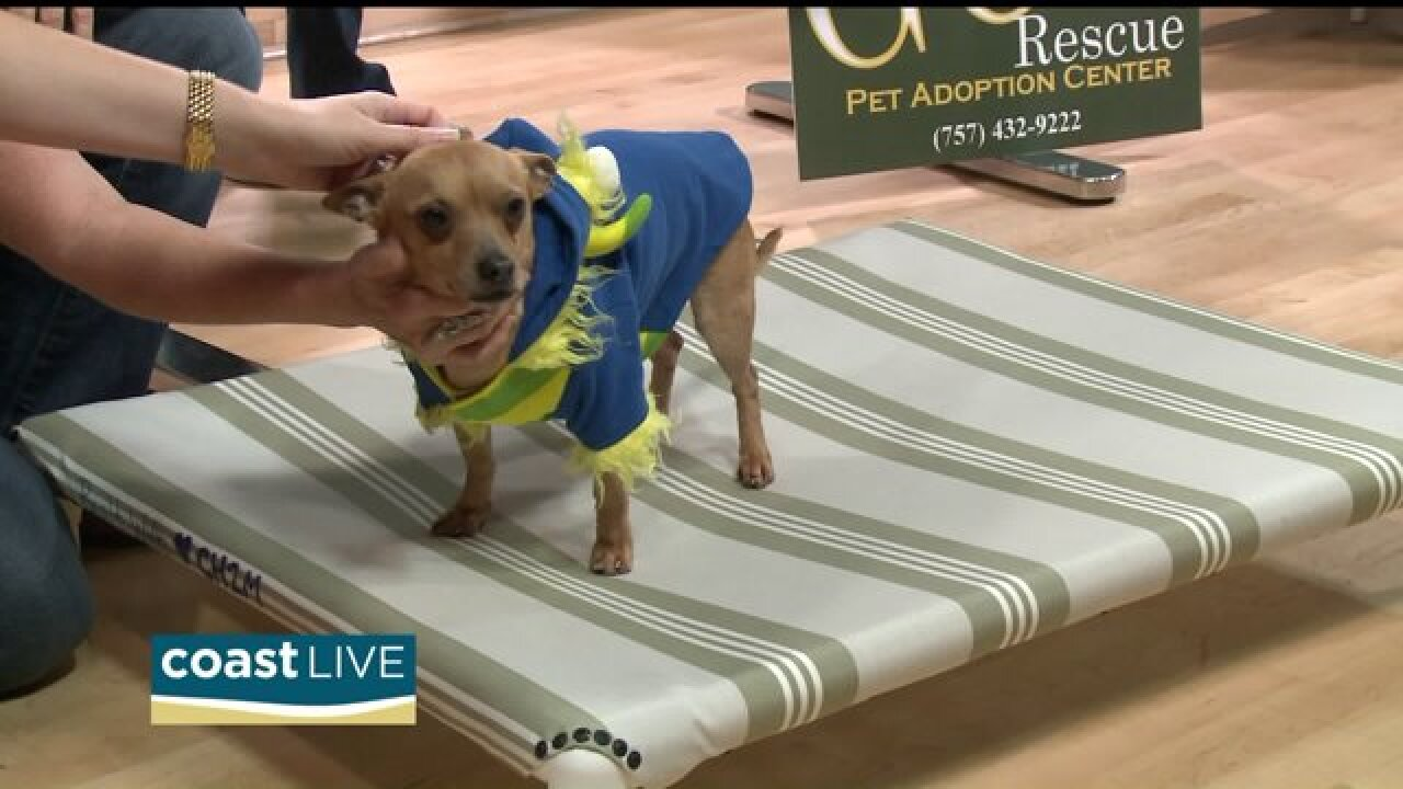 A DIY pet bed and a project helping shelter animals on CoastLive