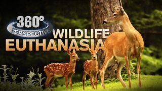 360° Perspective: Wildlife Euthanasia