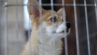 Animal shelters see loss in fundraising, but adoptions and foster care skyrocket