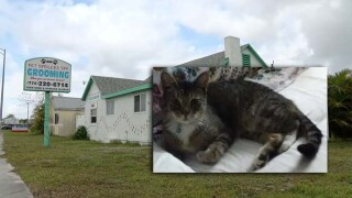 WPTV-PALM-CITY-CAT-DEATH.jpg