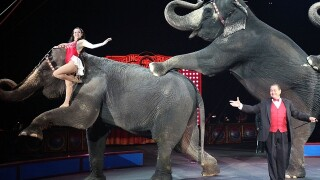 Ringling Bros. to retire circus elephants early