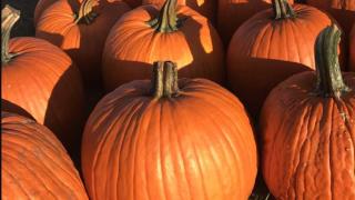 Cancer-surviving pumpkin farmer giving back