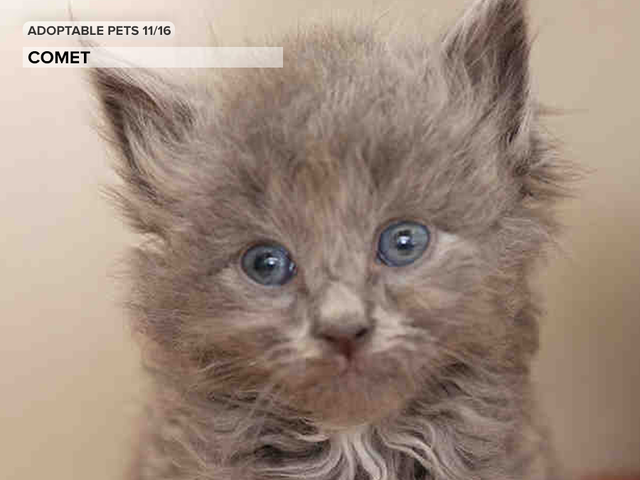 See 24 cute kittens and pups available for adoption in the Denver metro area