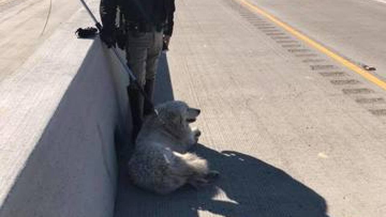CHP officers rescue dog from 99 near Panama