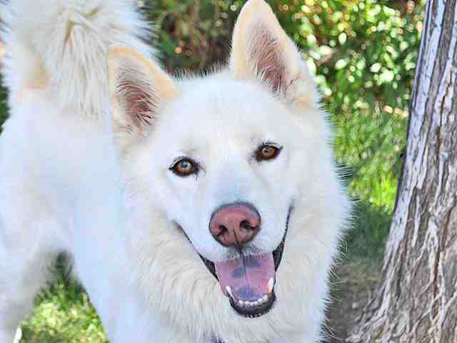 See the 20+ arctic dogs up for adoption
