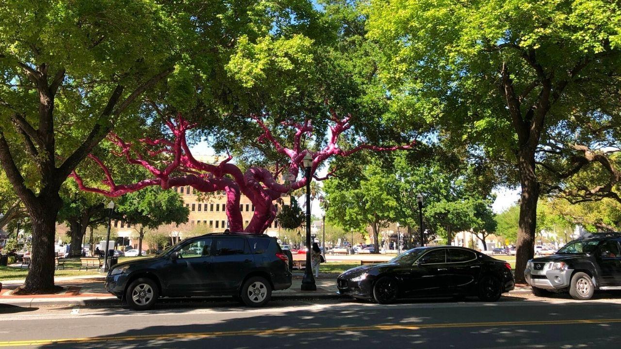 downtown-lakeland-pink-tree.jpg