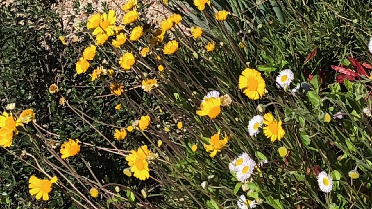 flowers for allergies.jpg