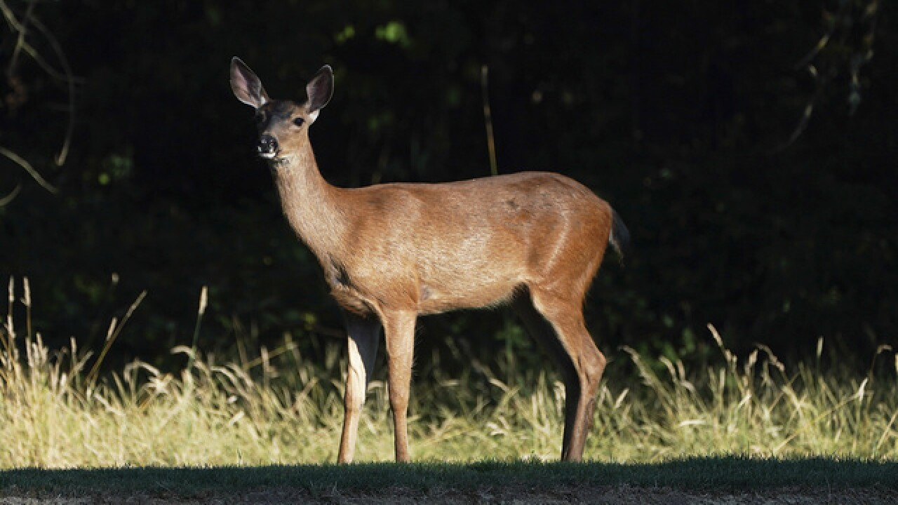 Watch for increased deer activity as hunters head into fields and forests