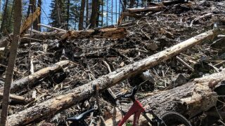 Bitterroot trail blocked by tree debris after avalanche this winter