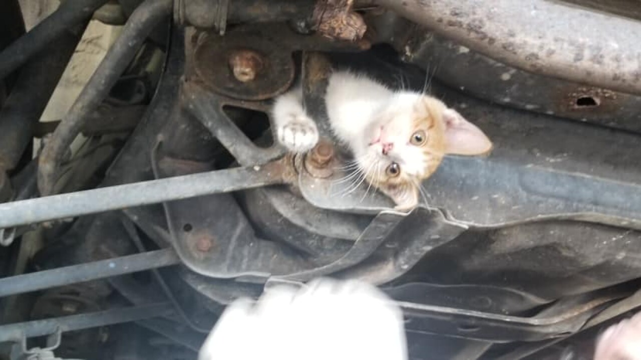 Kentucky mechanics rescue stowaway kitten trapped in frame of car